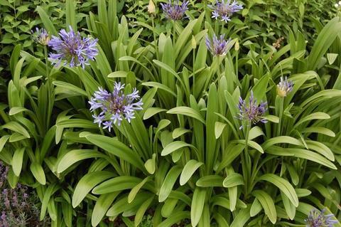 Servicios de Paisajismo Jardinería y Diseños Florales